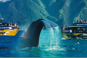 Koikoura Cruise